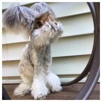 Angora-Bunny-EMGN11